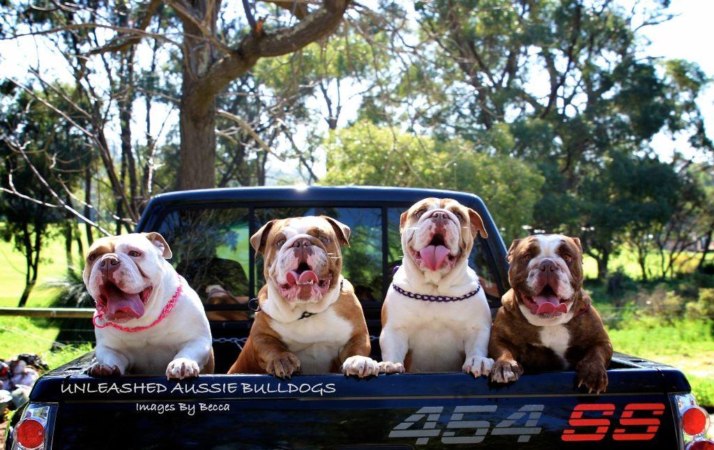 dog days bulldogs